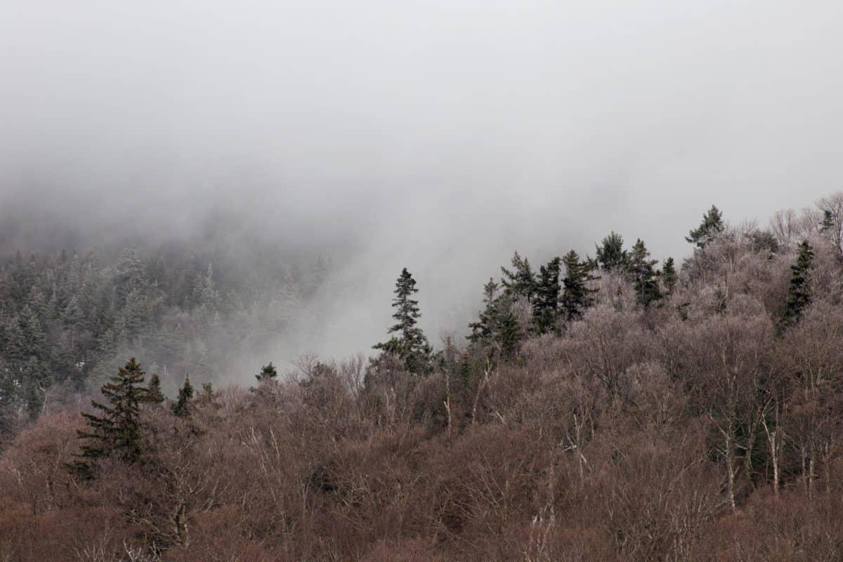 мъгла, зората, зима, пейзаж, дърво, природа, мъгла, сняг, небе