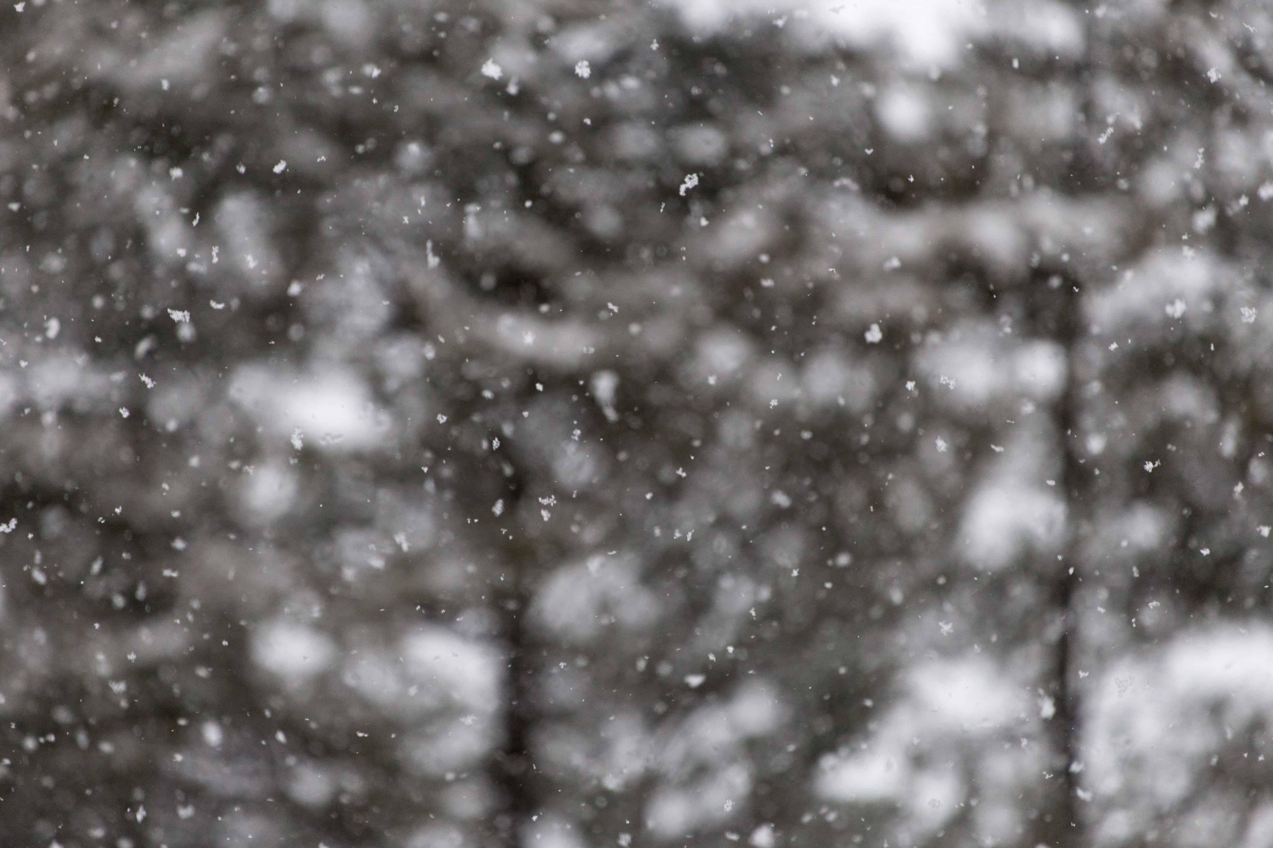 Imagen gratis: Resumen, copo de nieve, naturaleza, hielo, invierno ...