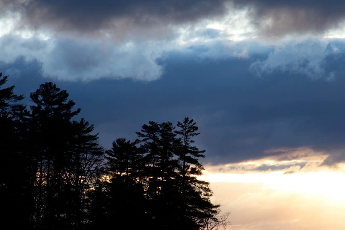 sole, cielo, inverno, natura, alba, nebbia, tramonto, atmosfera, albero
