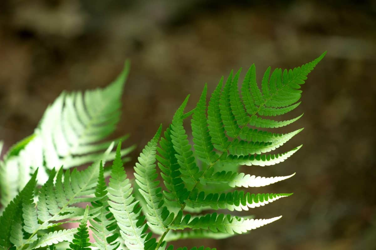 green leaf, fern, sunrays, shadow, flora, nature, plant, forest