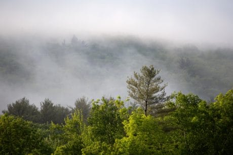 fog, mist, sky, nature, tree, wood, landscape, forest, hill