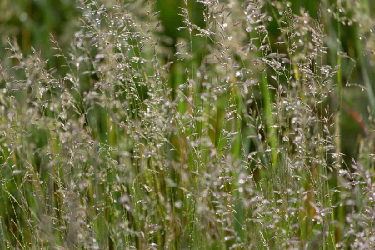 verano, jardín, hoja, flor, amanecer, hierba, flora, campo, naturaleza