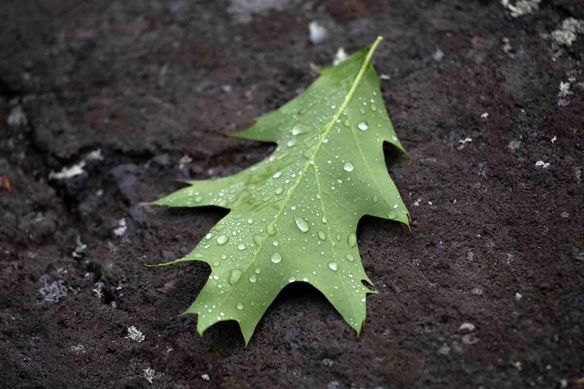 росата, дъжда, земята, зелени листа, природата, земята, подробно