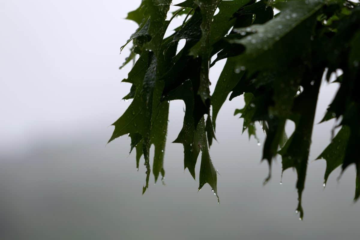 grünes Blatt, Natur, Flora, Baum, Pflanze, Wald, Sommer, outdoor