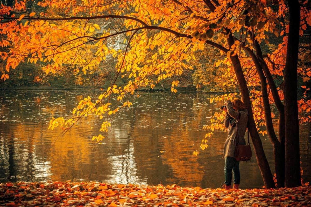 дърво, листа, дърво, природа, есен, гора, пейзаж, листа