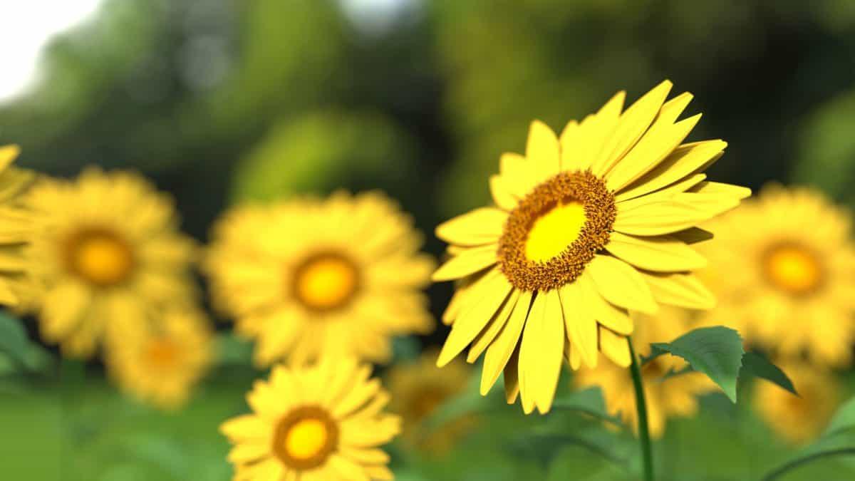 jardin, fleurs, flore, nature, feuilles, été, pétale, belle