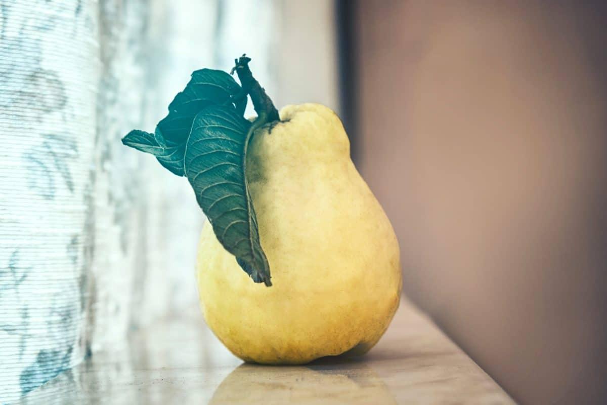 membrillo, fruta, hoja verde, alimentos