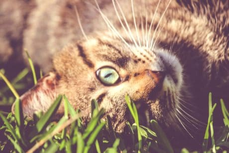 wildlife, animal, cute, nature, cat, feline, fur, green grass, kitten