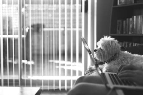 dog, office, window, indoor, monochrome,