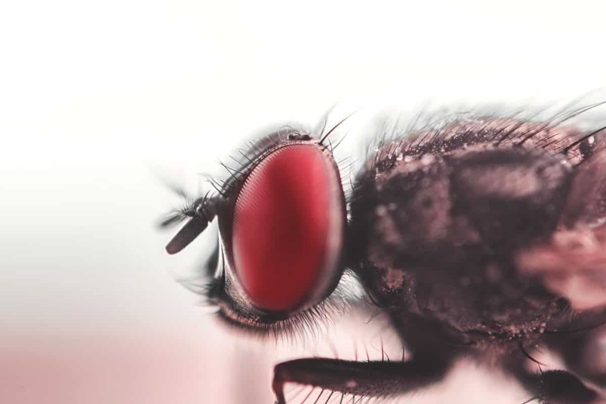 insecto, ojos, macro, detalle, animal, biología, artrópodo, Zoología