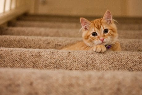 staircase, animal pet, cat, kitten, feline, kitty, cute, fur, young