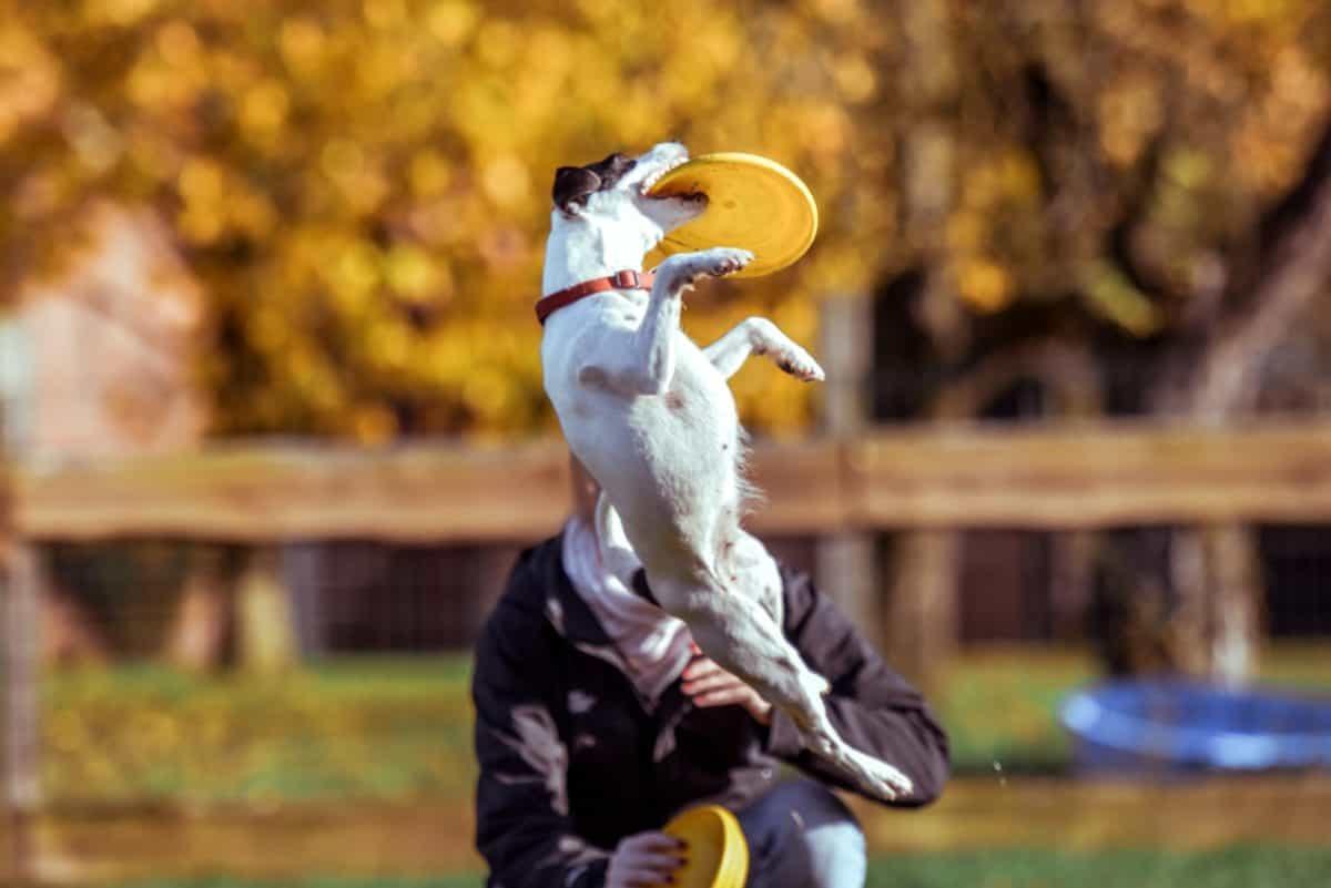 chien, concours, gens, saut, mascotte, personne, plein air, herbe