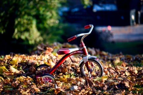 wood, tree, leaf, nature, wheel, tricycle, vehicle, toy, autumn