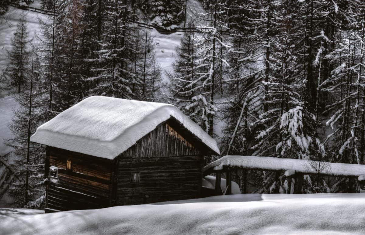 bungalow, tree, cold, wood, frost, winter, snow, barn, structure, outdoor
