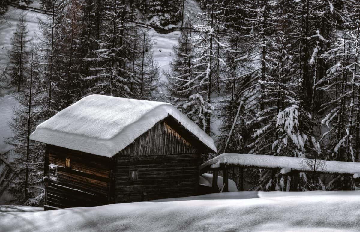 Bungalow, árbol, frío, madera, hielo, invierno, nieve, granero, estructura al aire libre