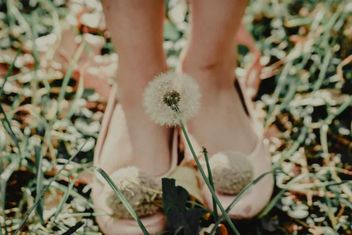 pied, cuir, herbe, chaussures, nature, fleur, chaussures