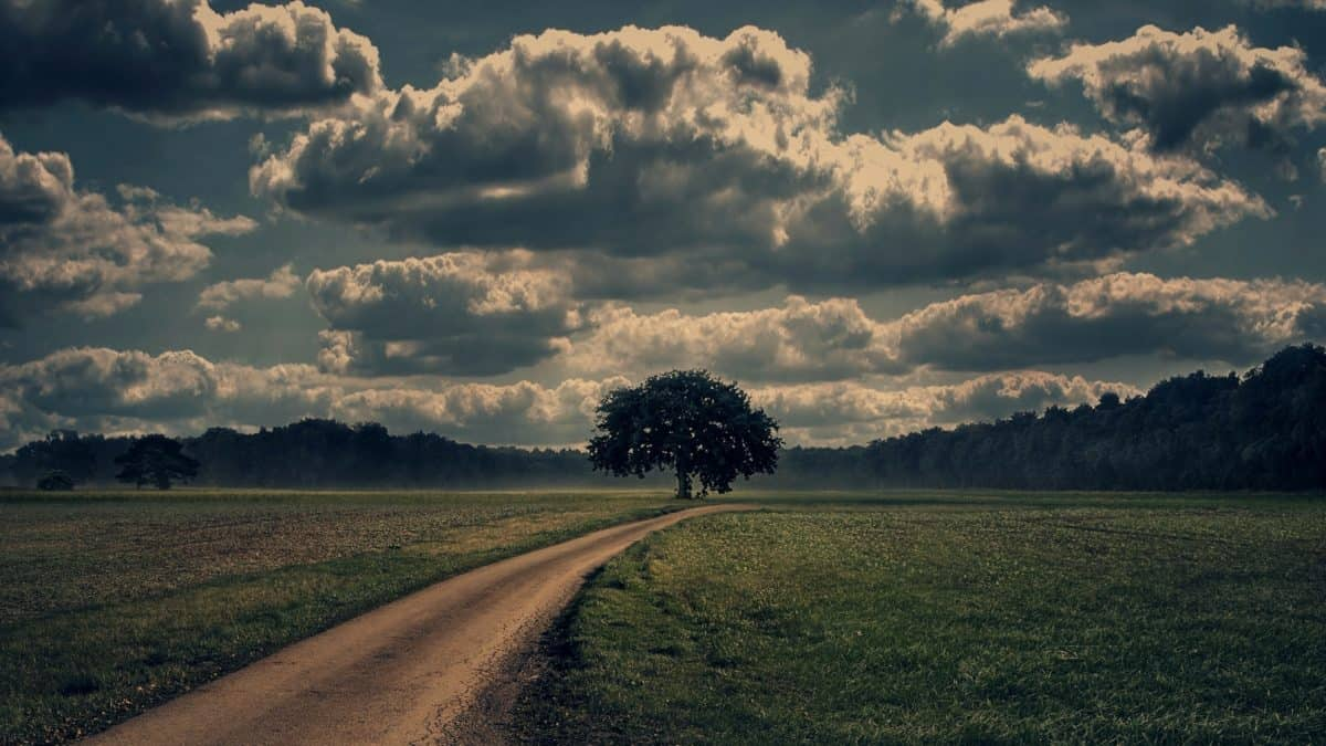 road, cloud, agriculture, landscape, sunset, nature, countryside, sky, tree