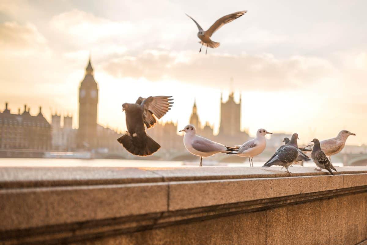 Himmel, Architektur, Vogel, Stadt, Taube, Tageslicht, Tier, im freien