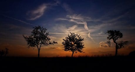 night, sun, backlit, sky, landscape, sunset, tree, silhouette, dawn