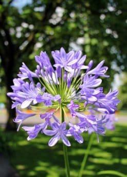 природата, Градина, флора, лятна, диви цветя, листа, венчелистче, растителна
