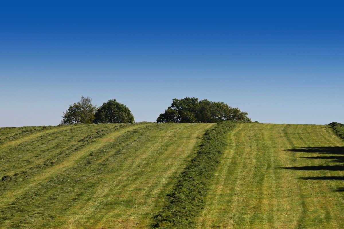 ruoho, sininen taivas, maatalous, luonto, maisema, maaseudulla, kenttä