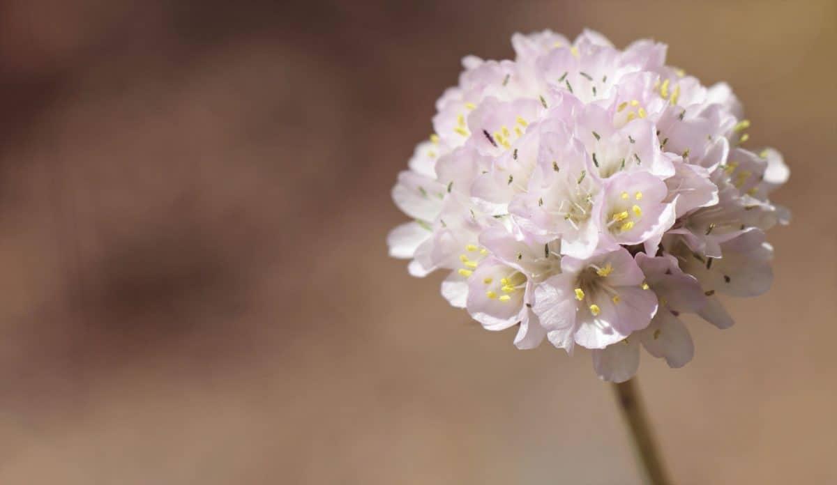Natur, wilde Blume, Flora, Pflanze, indoor, Blütenblätter