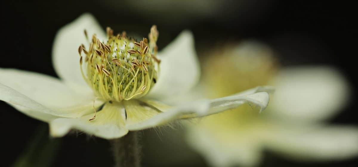 Flora, natura, foglia, fiore bianco, giardino, coperta