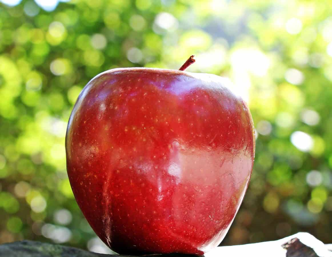 food, red apple, nutrition, fruit, delicious, tree, orchard, daylight