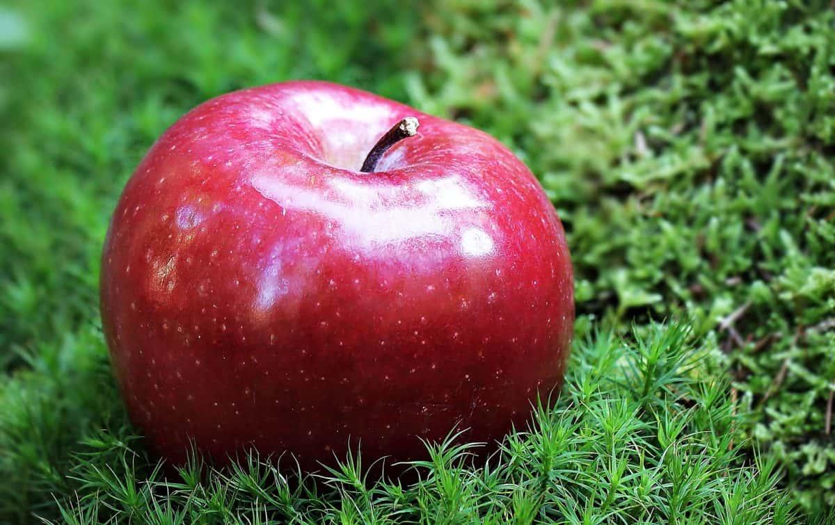 fruta, comida, rojo manzana deliciosa, dulce, nutrición dieta, gren hierba