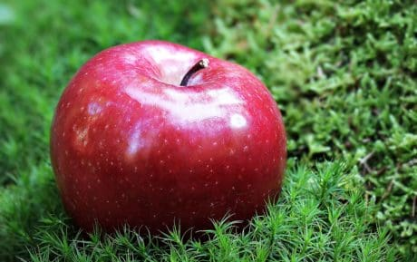 fruit, food, red apple, delicious, diet, sweet, nutrition, gren grass