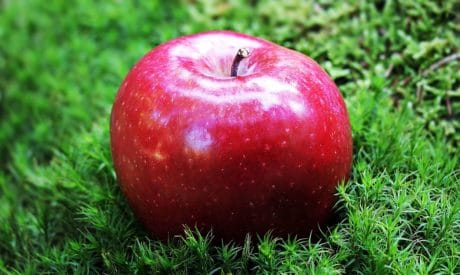 food, red apple, fruit, green grass, outdoor, orchard