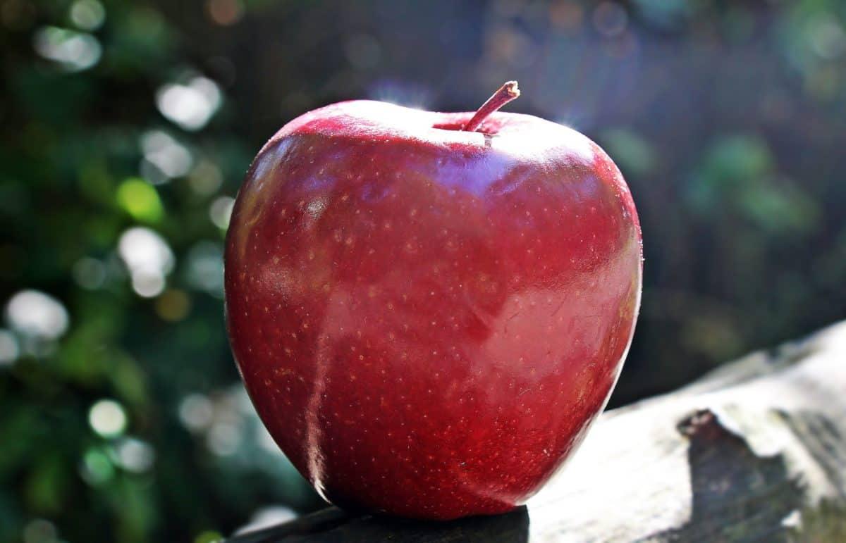 Obst, Lebensmittel, roter Apfel, Tageslicht, sonnenschein, outdoor, Baum, Stillleben, Ernährung