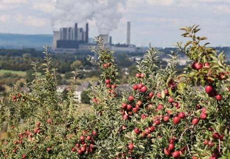 orchard, plant, red apple, orchard, agriculture, landscape, city, industry