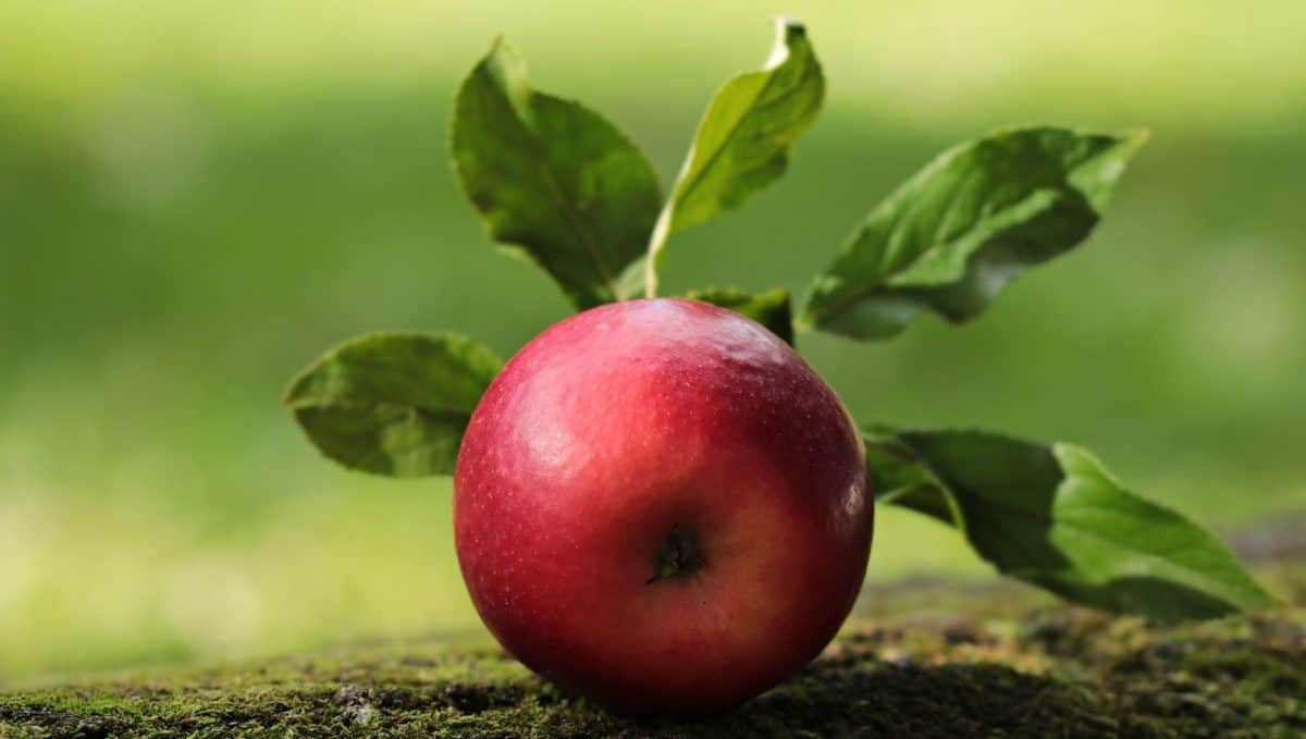 nature, red apple, food, green leaf, fruit