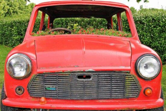 car, oldtimer, vehicle, classic, headlight, flower, decoration, garden