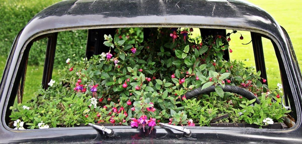 Градина, цветя, трева, открито, автомобил