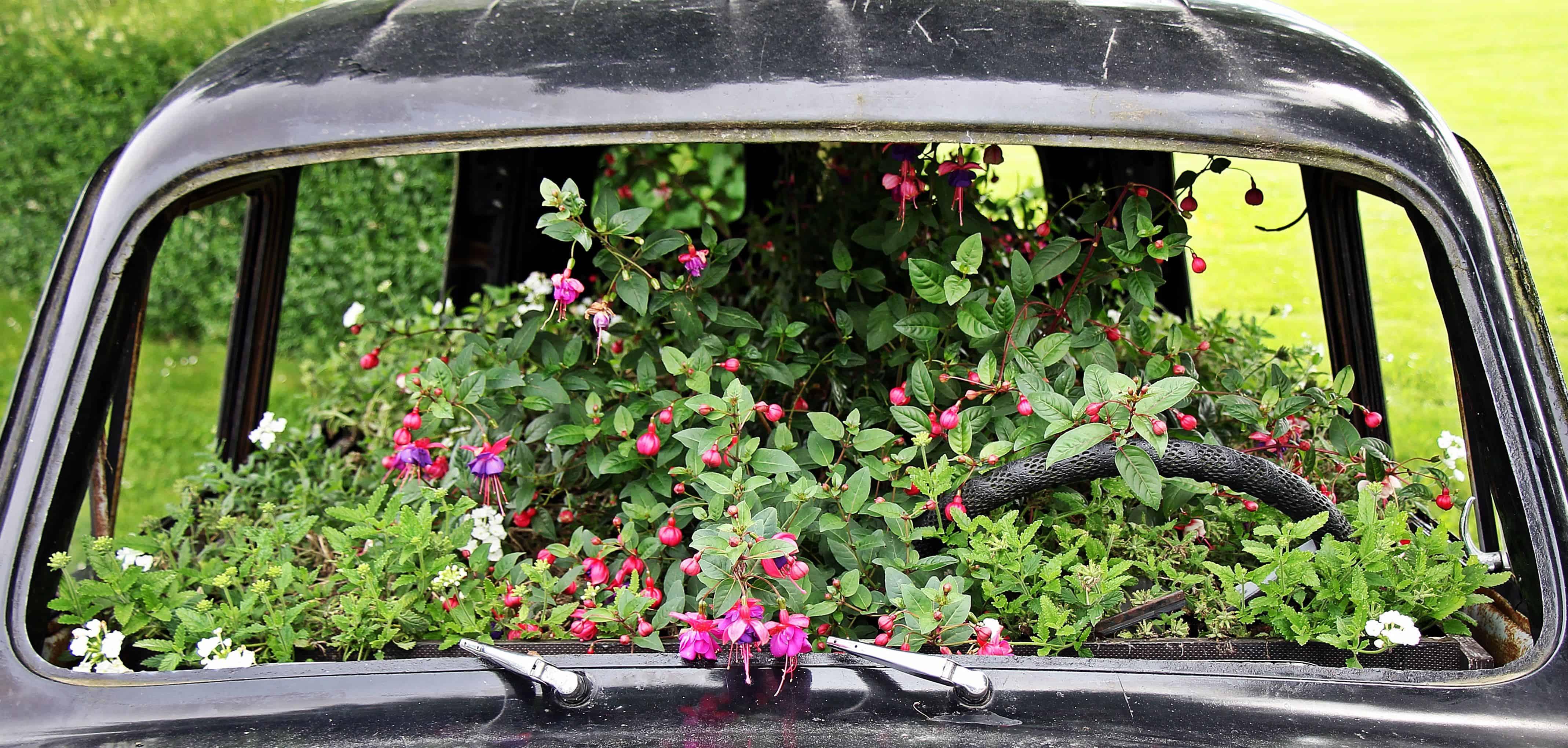 Image libre: jardin, fleurs, gazon, plein air, véhicule, voiture