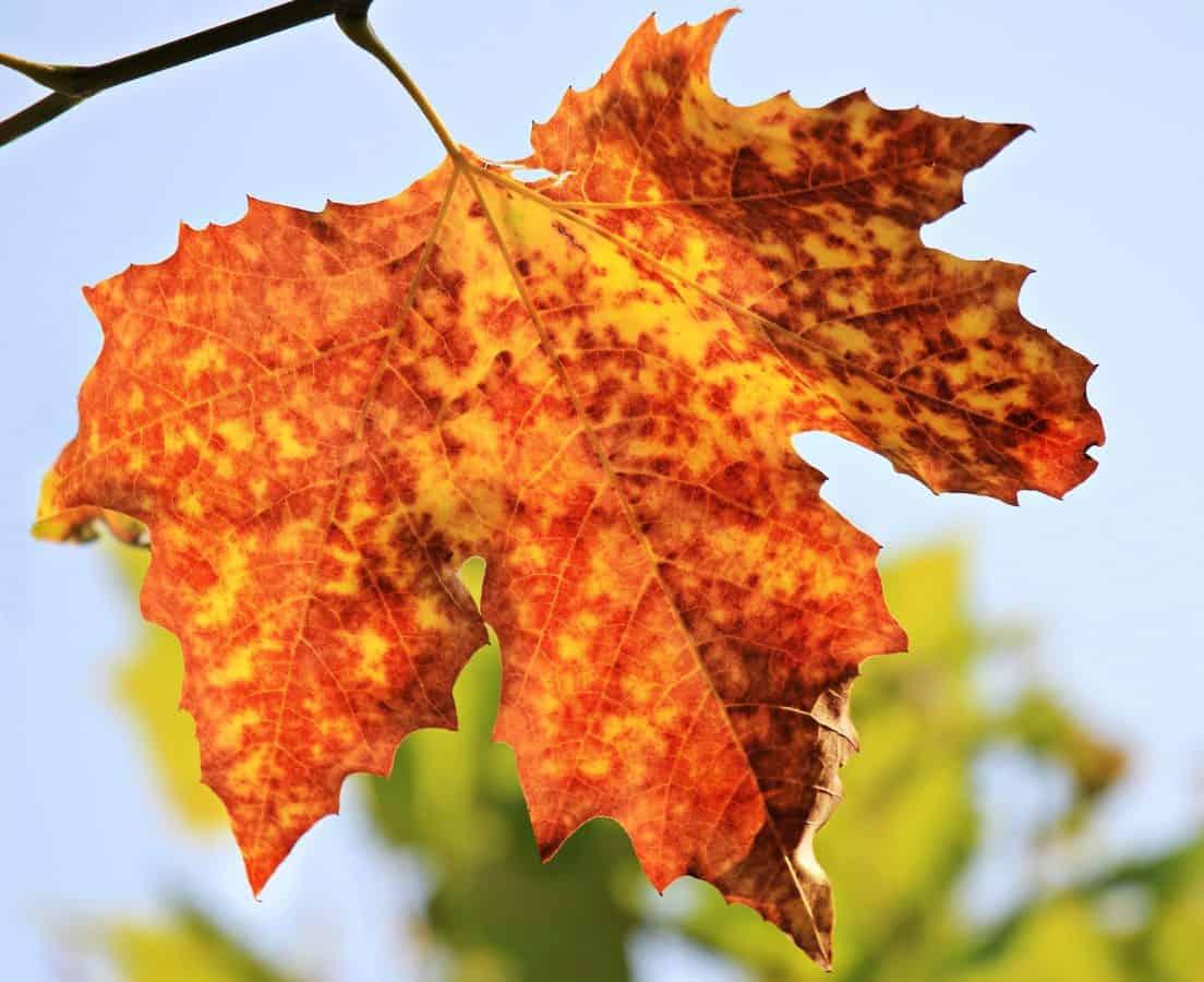 flora, natur, gren, gule blade, træ, gren, efterår
