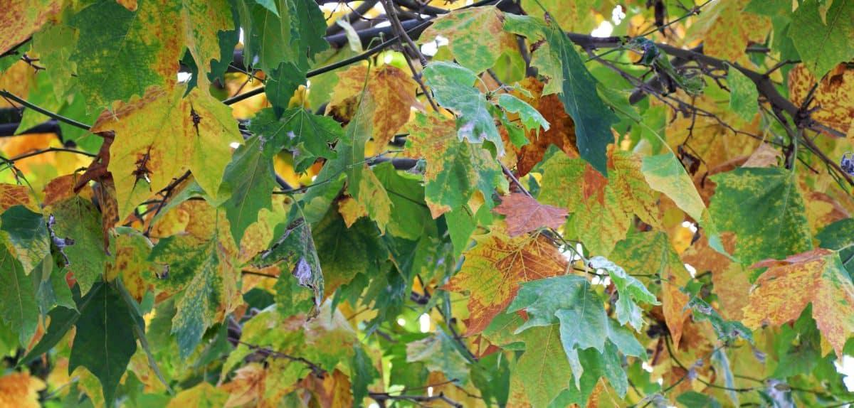 зелени листа, клон, природа, дърво, флора, открито, растителни, лято