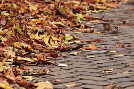 texture, road, pavement, autumn, yellow leaf, concrete, outdoor