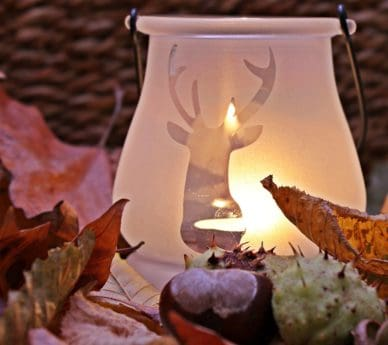 still life, leaf, autumn, candle, glass, decoration, chestnut