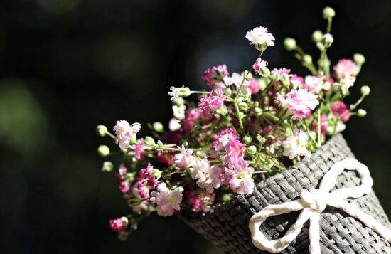 still life, photo studio, nature, garden, flora, flower, beautiful, colorful