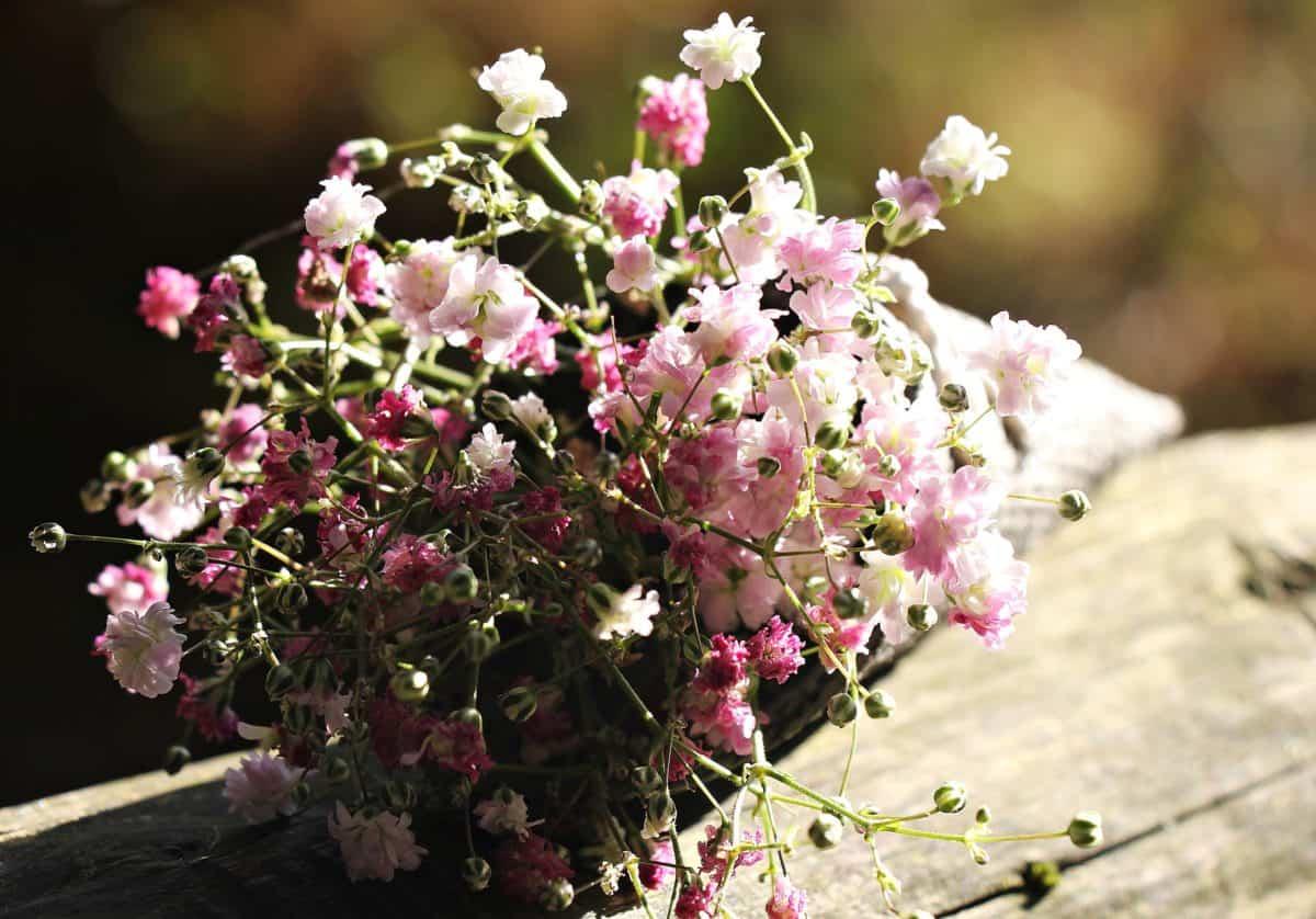 nature, nature morte, fleurs, été, flore, jardin, plantes, horticulture