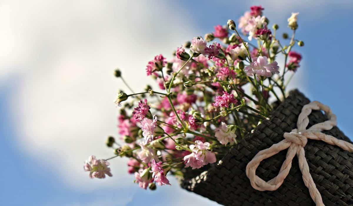 naturaleza muerta, cielo azul, flor, verano, naturaleza, flora, jardín, interior
