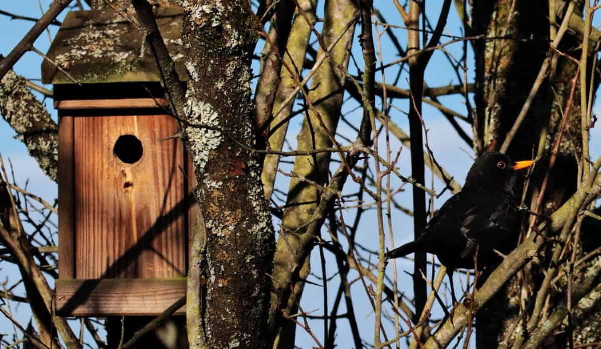 træ, træ, birdhouse, natur, dyreliv, reden, sort fugl, læ