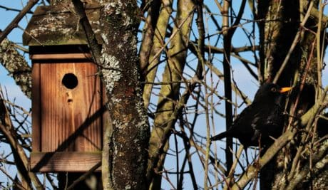 tree, wood, birdhouse, nature, wildlife, nest, black bird, shelter
