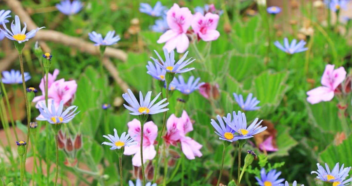 Sommer, Flora, wilde Blume, bunt, Wiese, Garten, Blatt, Natur, Rasen, im freien