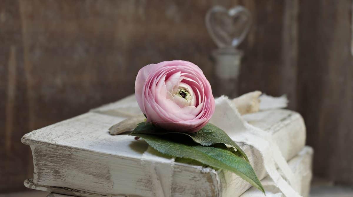 fiore, petalo, libro, oggetto, natura morta, decorazione, tabella, fiocco, rosa