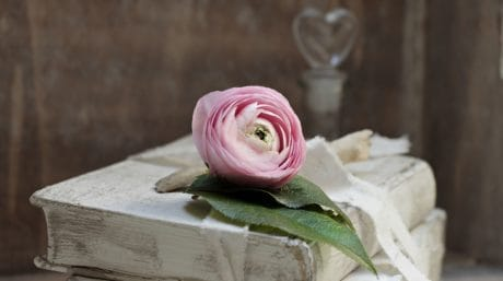 flower, petal, book, object, still life, decoration, table, bow, rose