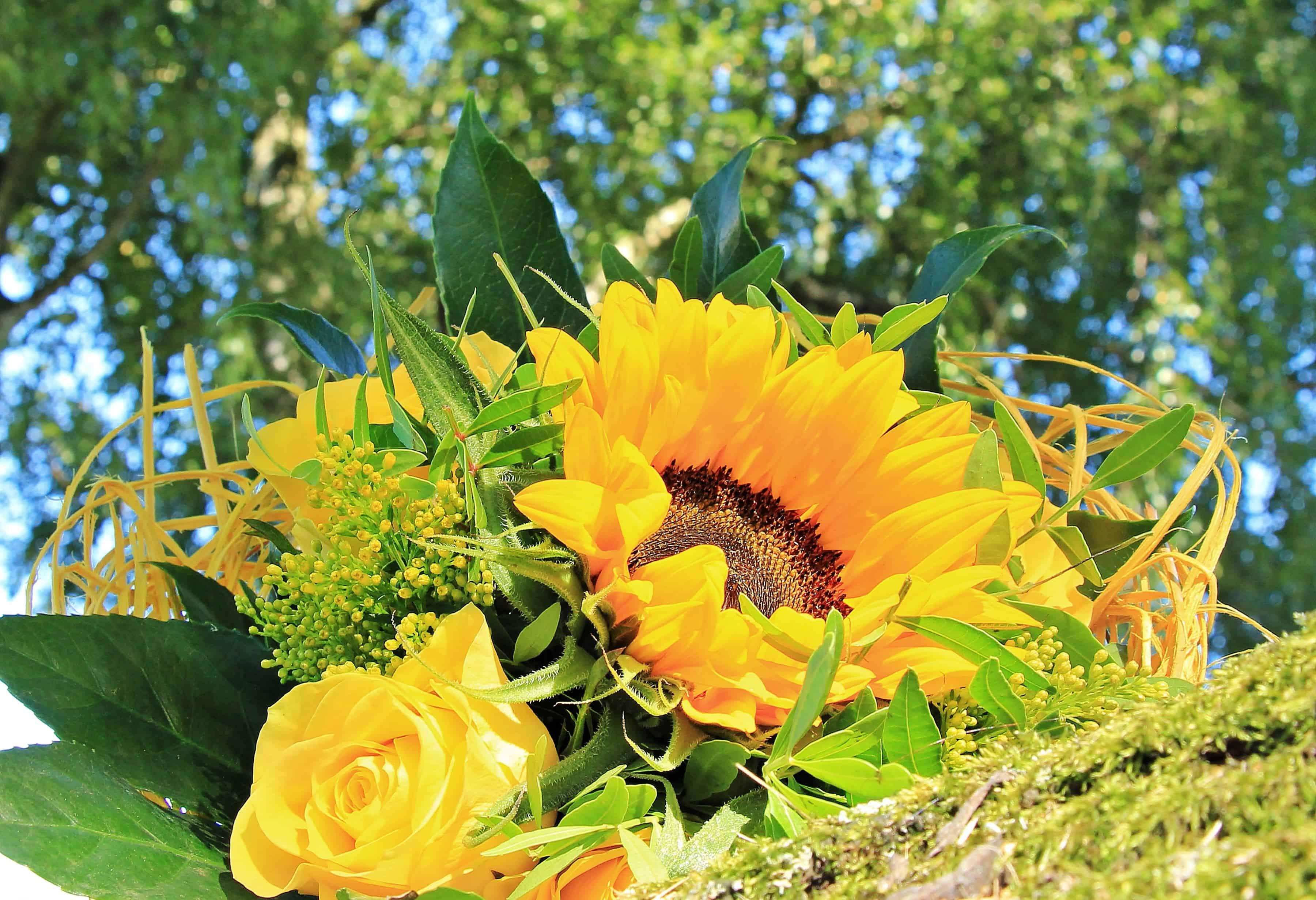 Imagen gratis: girasol, flora, verano, naturaleza, hoja, flor color ...